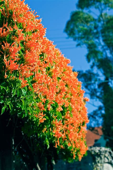 Climbing Plants Are Among The Most Useful Plants In The