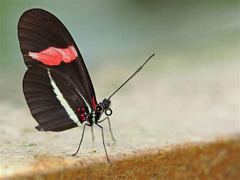 Botanischer Garten Schmetterlinge öffnungszeiten by Tropische Schmetterlinge