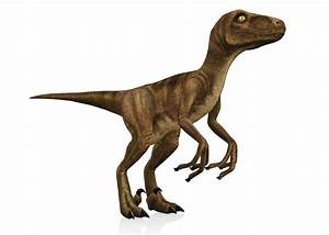 The Cheetahs Among the Dinosaurs: Facts About Velociraptors  Velociraptor