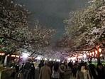 3/29上野公園~賞夜櫻@TOMOTOMO的遊日小心得~日本 PChome 個人新聞台