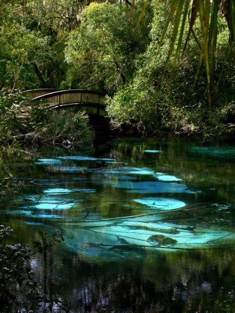 Hammock Springs by 17 Spots In Florida That Are Out Of A Tale