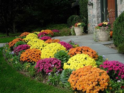 bright bush for landscaping bright fall garden design and natural yard lndscaping ideas