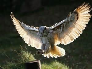Owl | Tae Yun Kim's Wisdom as shown through animals
