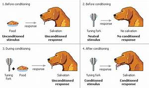 Ivan Pavlov classical conditioning dogs biography