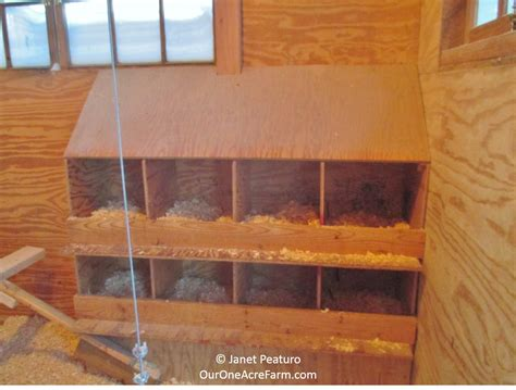 guide  designing  perfect chicken coop