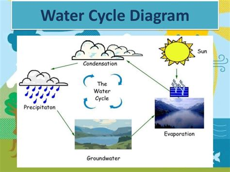 The Water Cycle Diagram Pdf by O Neill Molly The Water Cycle