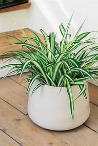 Welche Pflanzen Gegen Wespen : pflanzen die die luft reinigen euroflorist blog ~ Lizthompson.info Haus und Dekorationen