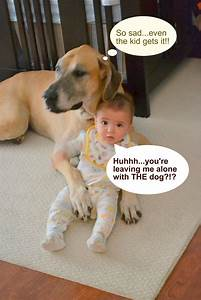 funny dog pictures with captions | funny-dogs-pictures ...