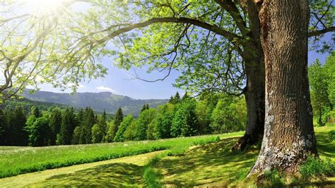 bäume schneiden im sommer die 71 besten baum hintergrundbilder