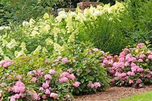 Hortensien Wann Pflanzen : wann hortensien schneiden hortensien schneiden wann ist ~ Lizthompson.info Haus und Dekorationen