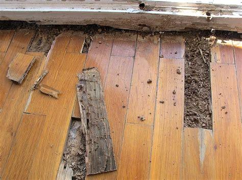 parquet devorado por las termitas