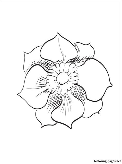 anemone coloring  printable page coloring pages