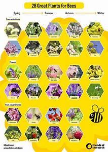 Seasonal Guide To Bee