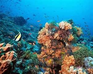 TheAquatic Biomes: Aquatic biomesare grouped into two ...  Aquatic