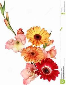 Beau Bouquet De Fleur : beau bouquet des fleurs blanches et rouges sur un fond ~ Dallasstarsshop.com Idées de Décoration