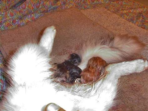 Blog About Cats Pictures Of Cats Giving Birth