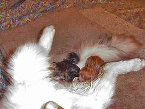 Dog Giving Birth To Cat