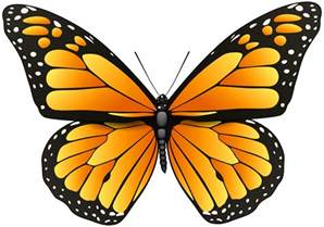 wedding shoes for outdoor wedding orange butterfly png clip best web clipart