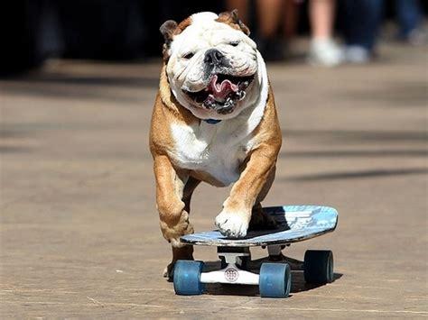 dog talent contest sales raffles  merchant square
