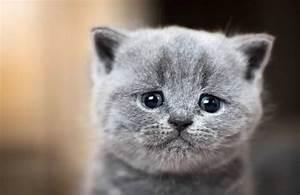 Odeur Urine Chat : comment enlever l 39 odeur d 39 urine de chat nos astuces les plus efficaces ~ Maxctalentgroup.com Avis de Voitures