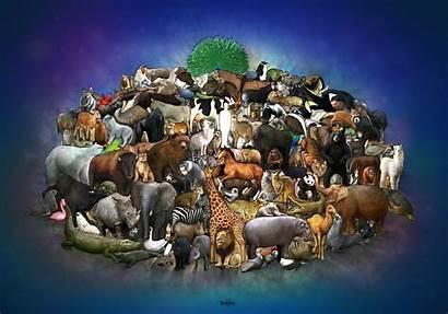 Animals Animal Interlocking Puzzle Common Sense Source