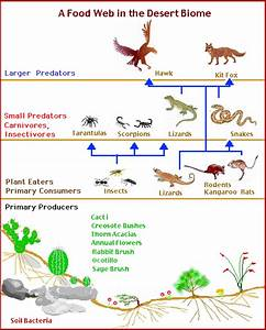 Desert habitats homework help | KS1 and KS2 geography ...