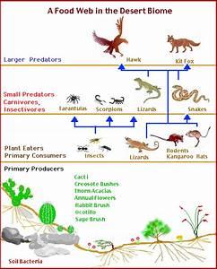 Desert Biome
