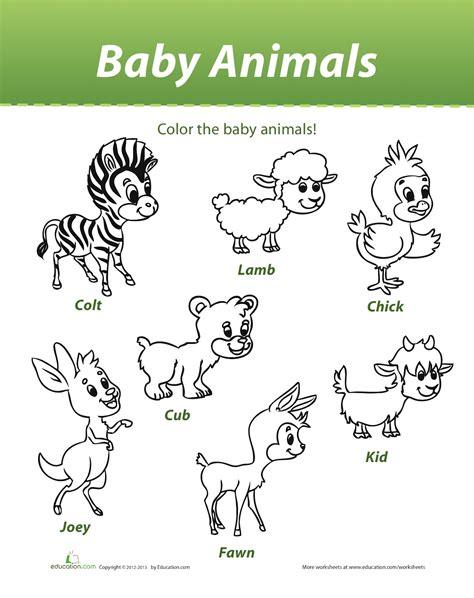 Pz C Baby Animals
