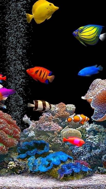 Aquarium Fishes Colorful Water
