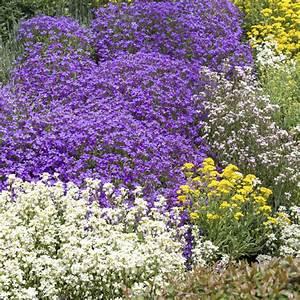 Plantes Vivaces Pour Massif : fleurs vivaces ~ Premium-room.com Idées de Décoration