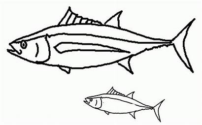 Coloring Fish Tropical Hawaiian Trigger Colouring Popular
