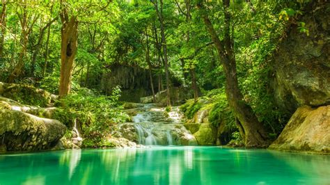 verano los bosques lagos arroyos cascadas rocas