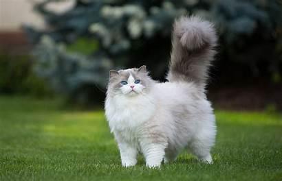 Fluffy Cat Names Easy