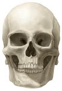 Interior of the Skull Inferior View