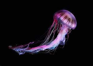 Jellyfish Colorful Photography Series – Pixolog: design ...