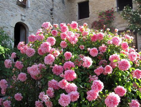 Rosier Jardin De Valloires by Jardin De Roses Anciennes En Franche Comt 233 Mon