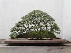Bonsai Arten Für Anfänger : outdoor bonsai arten pflegetipps kaufberatung ~ Sanjose-hotels-ca.com Haus und Dekorationen