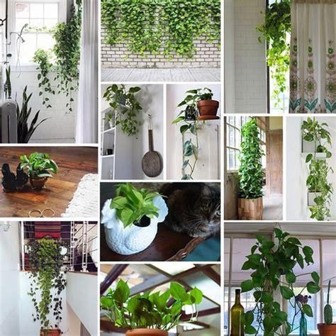 Plants For Bathroom Counter by Meet The Pothos The Plant High Windows And Window