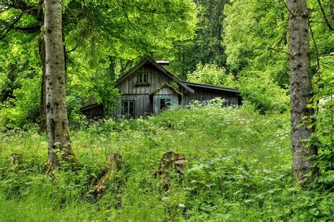 House In The Forest : Old Forest Home By Burtn On Deviantart