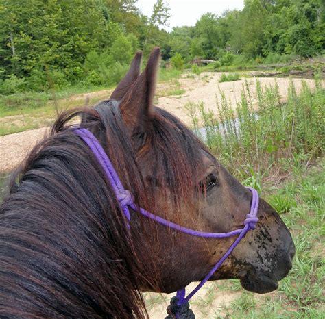 wet horses indian nose friends ride camp blowing mustang dreams seemed thru walking enjoy water
