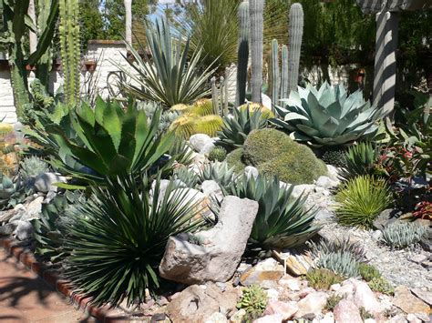 succulent landscape design my carolina yard the year of the succulent tips for