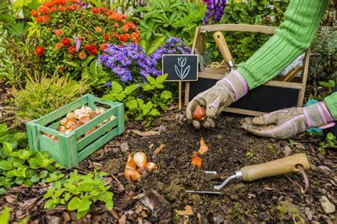 Herbst Gartenarbeit by Tulpen Pflanzen Unsere Tipps