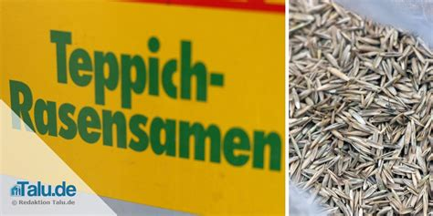 Wann Geht Rasensamen Auf by Rasen S 228 En Im Oktober November Wann Ist Es Zu Sp 228 T