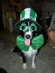 happy st 39 s day animal pictures let 39 s