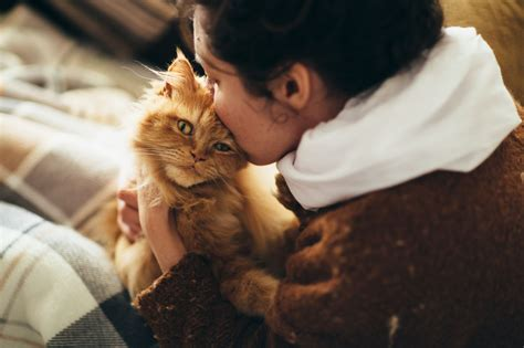 soothe cat separation anxiety  vacation time