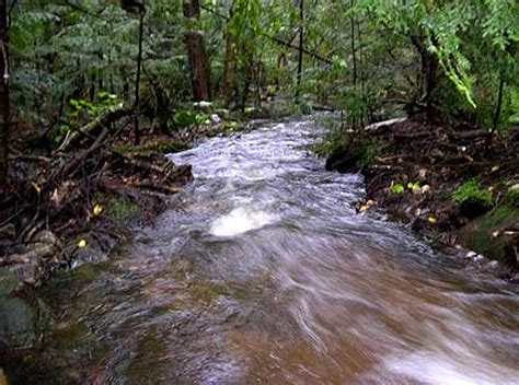 rivers  streams saturated  carbon