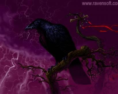 Raven Wallpapers Desktop Resolution 1024 1280 2003