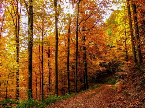 forest color fall colors in the black forest on a day like today