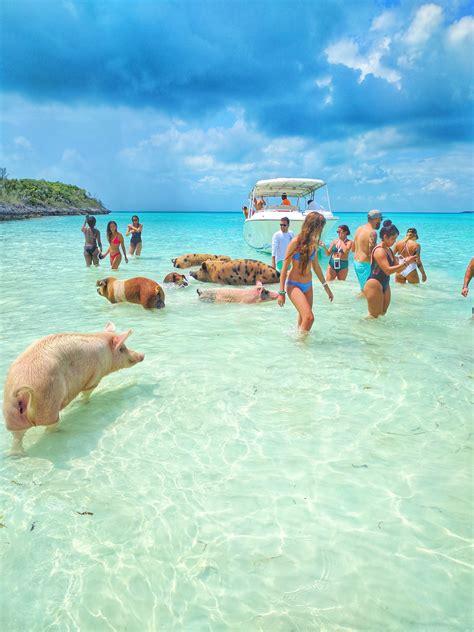 swimming pigs epic yacht charters exuma cays bahamas