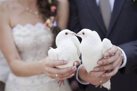 All you need to know about a wedding dove release   Easy Weddings UK